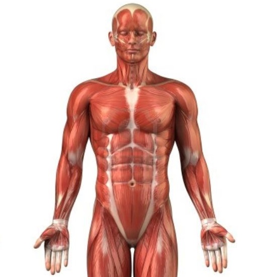 Soorten spierpijn